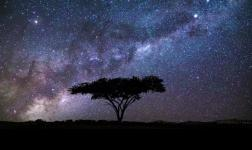 Acacia: a single tree, portrayed by time-lapse photography Masters