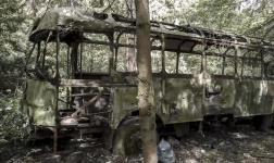 Delayed: a forgotten bus eaten by time and woods