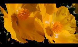 TLI-buon-esempio-timelapse-fiori-piante-bio