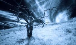 Hawaiian Tree Bones, Infrared Time-lapse by Gary Yost
