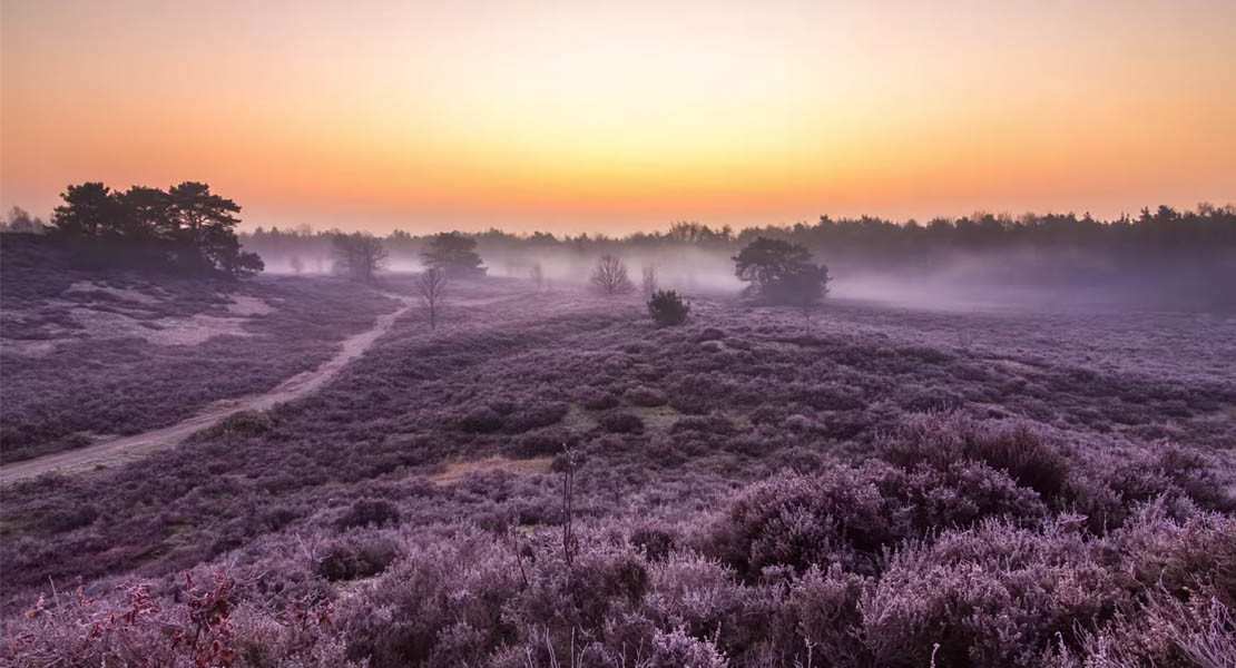 a timelapse journey through dutch nature time lapse network