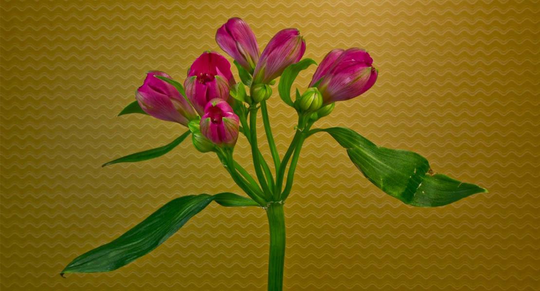 открытка с распускающимися цветами 9 цветов для